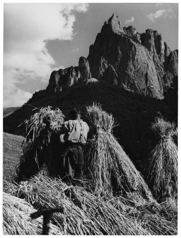 Raccolta del grano ai piedi delle montagne